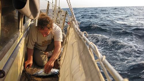 אורן מנקה דג בוניטה (טונה קטנה) שנתפס במהלך הפלגה. צילום: טניה רמניק ואורן טל