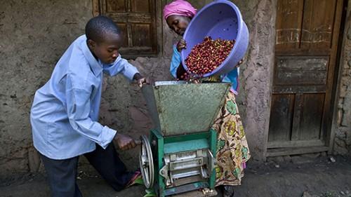 מגדלי קפה באוגנדה. צילום: אימג' בנק