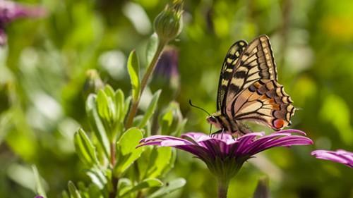 הדוגמאות על כנפי הפרפריות הן תמיד אחת מתוך שלוש הצורות המקוריותצילום: שאטרסטוק