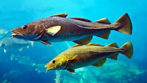 אפילו דגים מסוגלים ללמוד זה מזהצילום: שאטרסטוק