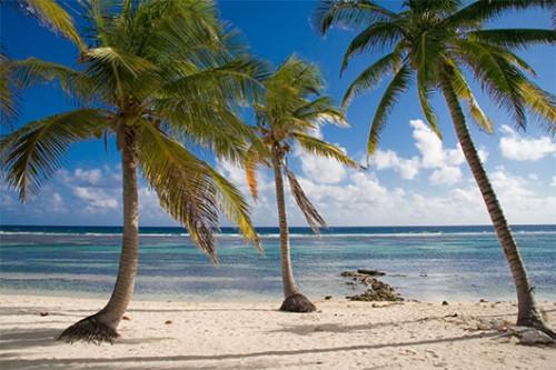 באיי קיימן פחת מספר היתושים בכ-80 אחוזצילום: שאטרסטוק