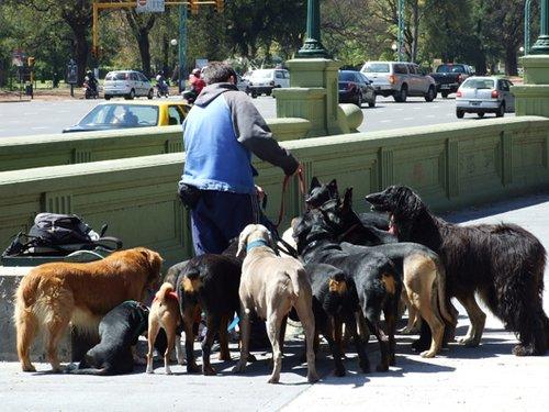 מי הוציא את הכלבים? צילום: Shutterstock