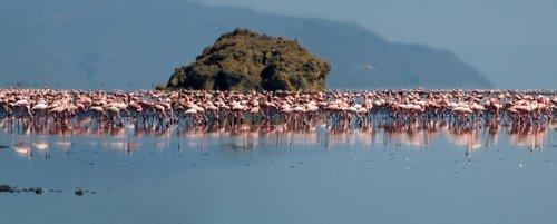 אגם הסודה נטרוןצילום: שאטרסטוק