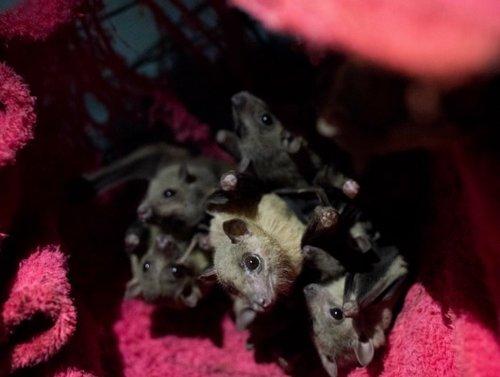 """אזור השינה המוחשך. """"בישראל אין ידע על עטלפים"""" (צילום: בן קלמר)"""
