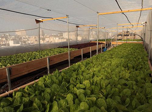 החווה החקלאית על גג דיזנגוף סנטר (צילום: מנדי פאלק)