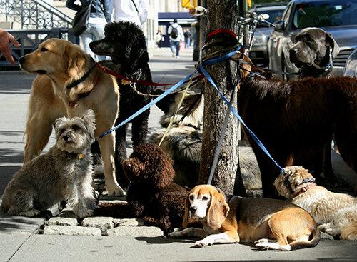 כלבים רבותיי, כלבים. אילוסטרציה: שאטרסטוק