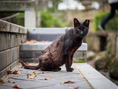 חתול איימי וויינהאוס. צילום: שאטר סטוק