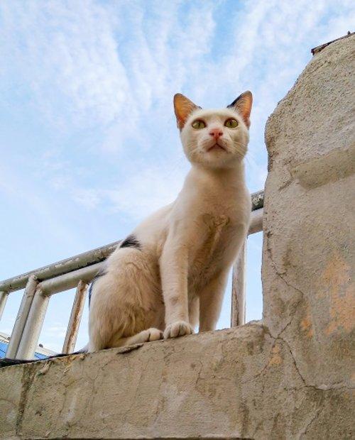 חתול דוד דביר