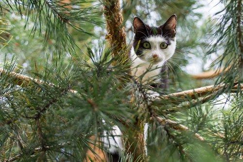 חתול טיילור סוויפט. צילום: שאטר סטוק