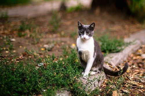 חתול נועה קירל