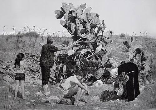 """סמאח שחאדה, """"קקטוס"""", 2016"""